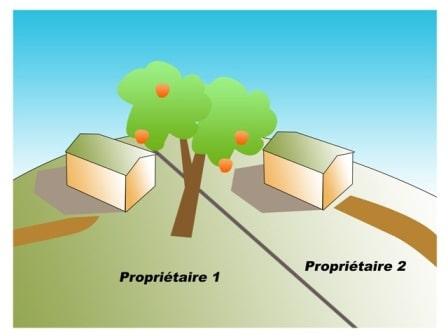Distance Plantation D Arbres Or Ge Co Touraine